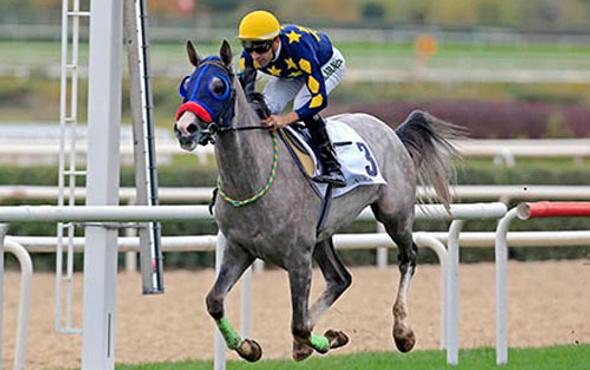 İzmir TJK at yarışı 3 Kasım 2016 altılı ganyan bülteni