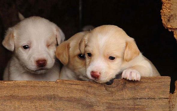Sıkışan köpek yavrularını belediye ekipleri kurtardı