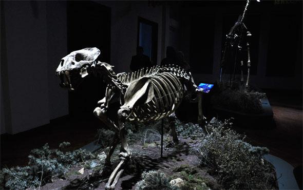 8 milyon yıllık fosiller meraklılarını bekliyor