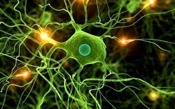 İnsan deri hücreleri motor nöronlara dönüştürüldü