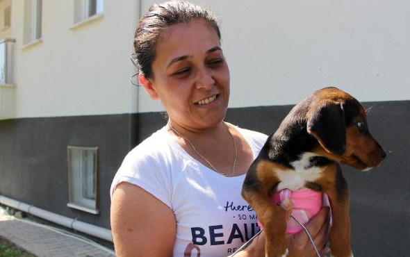 Bolu'da sokakta bulduğu felçli hayvanı sahiplendi