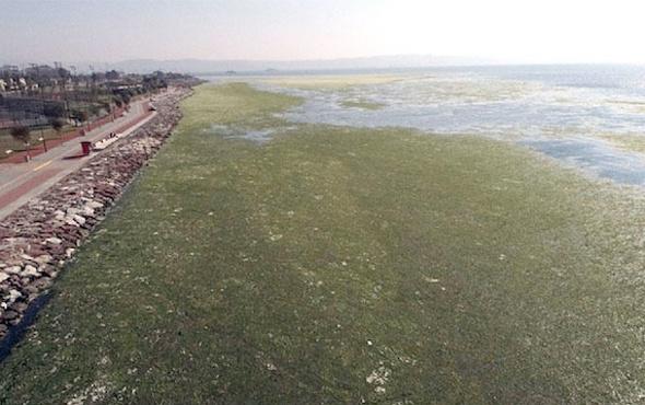 İzmir Körfezi'nde yürüyenleri şoke eden uyarı