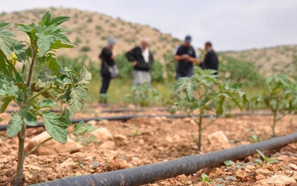 Organik tarıma büyük destek! GAP Organik Tarım Küme Projesi