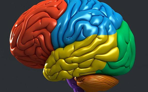 Kişilerin beyin anatomisi parmak izi gibi farklı