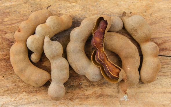 Demir hindi nedir, nelere faydalıdır? Demir hindi nasıl kullanılır?