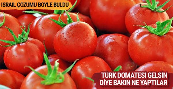 İsrail Türk domatesine muhtaç kaldı