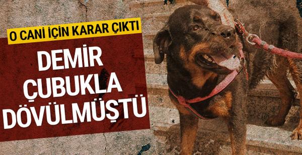 Köpeği demir sopayla döven sanığa ceza