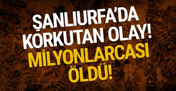 Şanlıurfa'da korkutan olay: Milyonlarcası öldü!
