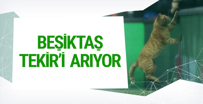 Beşiktaş Tekir'i arıyor! Sebebi ise...