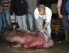 Marmara Denizi'nde 4 metrelik köpek balığı