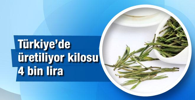 Türkiye'de üretiliyor kilosu 4 bin lira