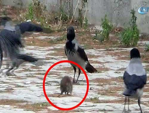 Kargaların fare ile mücadelesi kamerada