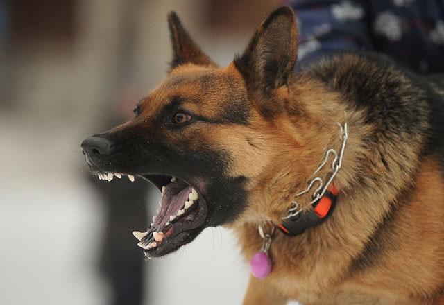 Saldıran bir köpeğe karşı sakın bunları yapmayın