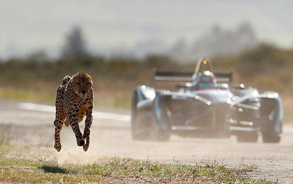 Elektrikli bir yarış otomobili mi yoksa çita mı?