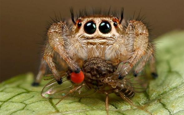 Örümceklerle ilgili şaşırtan bir bilgi daha