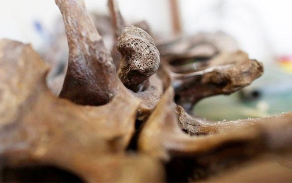 14 bin yıllık mamut fosili insan atalarını aydınlatacak!