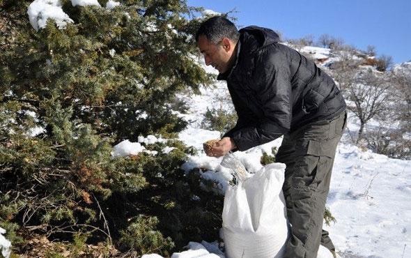 Tunceli'de yaban hayvanları için doğaya yem bırakıldı