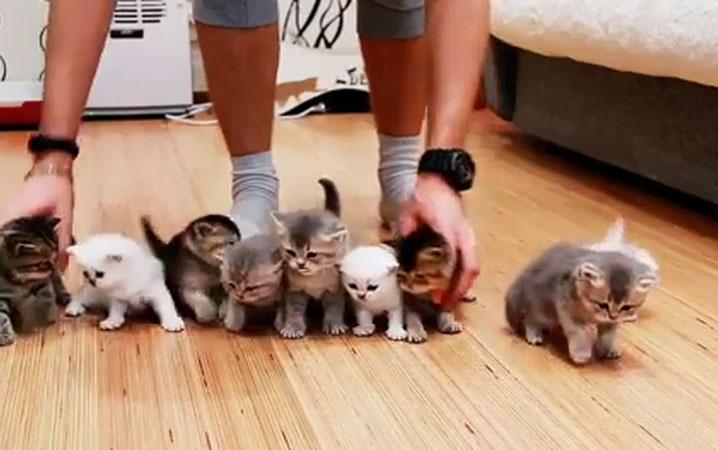 Yavru kedilerle fotoğraf çektirmek isteyen adamın dramı!