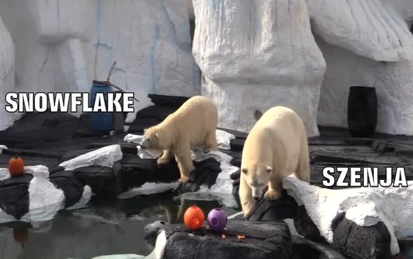 20 yıllık eşinden ayrılan kutup ayısı öldü