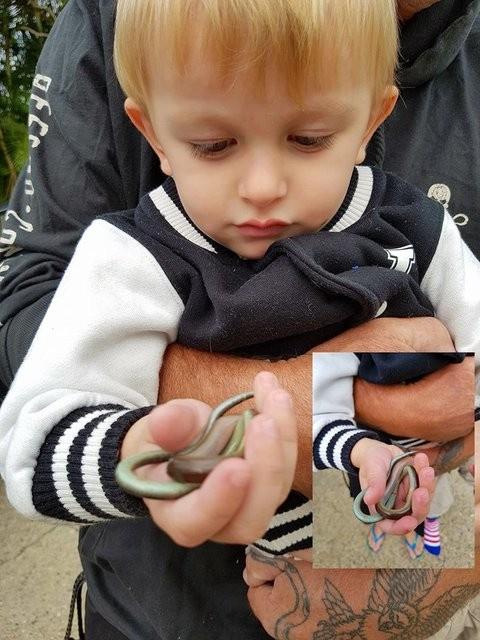 Sosyal medya bu cengaver çocuğu konuşuyor! Yılanları elleriyle...