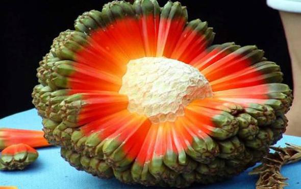 Bu meyveleri ilk defa göreceksiniz