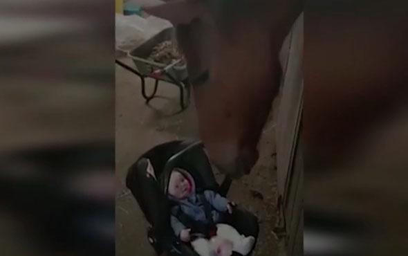 Ağlayan bebeği eğlendiren at görenleri şaşırttı