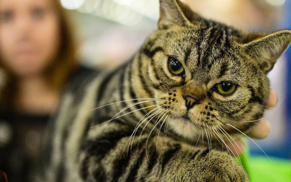 Kediler hakkında şoke eden gerçek kedilerin kökeni Türkiye