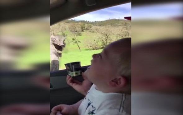 Deve kuşu küçük çocuğu gülme krizine soktu