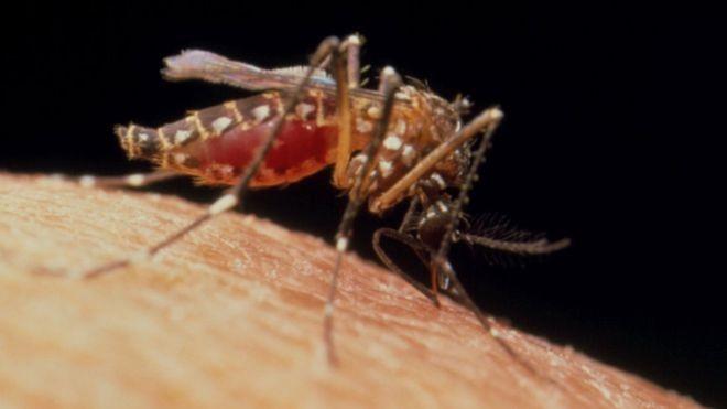 Sivrisinek ısırığına karşı ne yapılır?