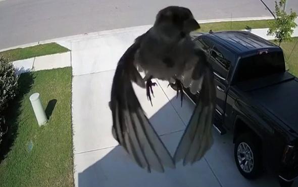 Kameranın çekim hızı, kuşun kanat çırpma hızıyla aynı olursa!