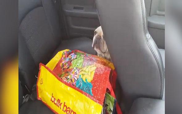 Arabada bırakılan köpek böyle kurtarıldı