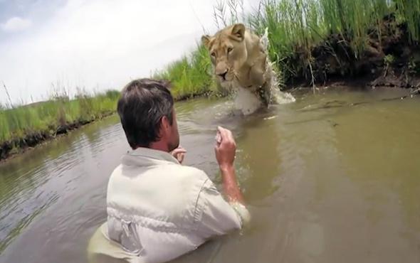 Aslan kurtarıcısını yıllar sonra böyle karşıladı