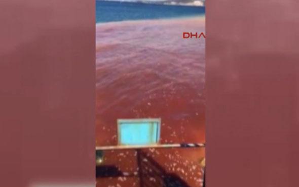 İzmir'de korkutan görüntü! Deniz kırmızıya boyandı