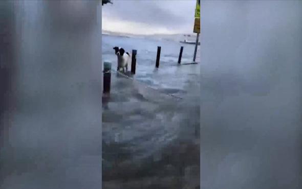 İzmir'de köpek sel sularında mahsur kaldı