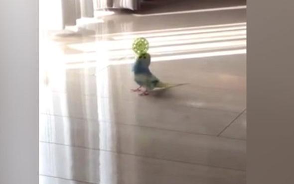 Spor yapan kuş görüntüsü sosyal medyayı salladı