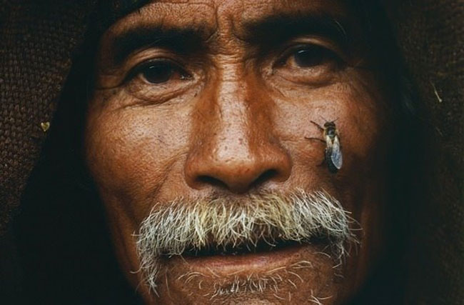 Arılarla avcıların ölümüne bal savaşı! Muhteşem fotoğraflarla bal avı...