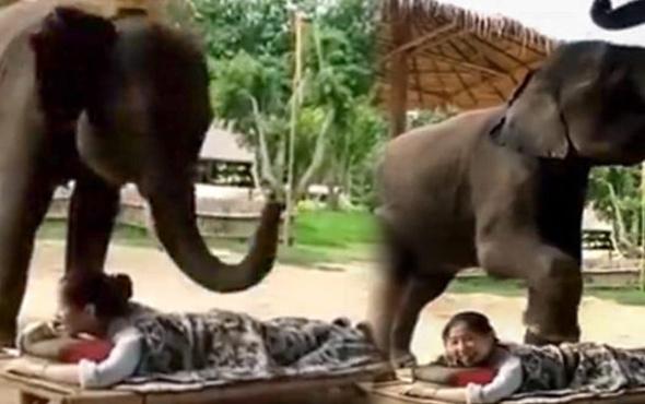 Müşterisine masaj yapan fil fenomen oldu