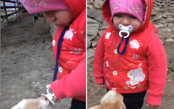 Bebek ile kuzunun gülümseten anları kamerada