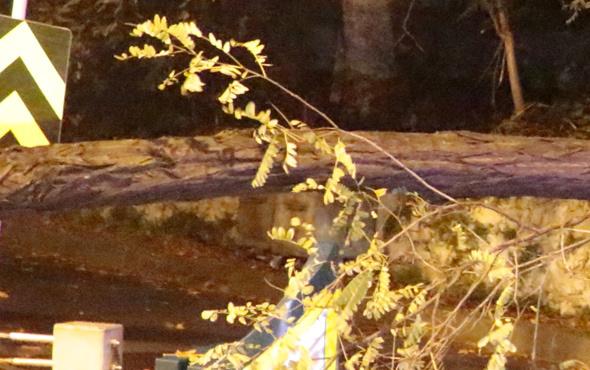 İstanbul'un göbeğinde ağaç devrildi, yol trafiğe kapandı