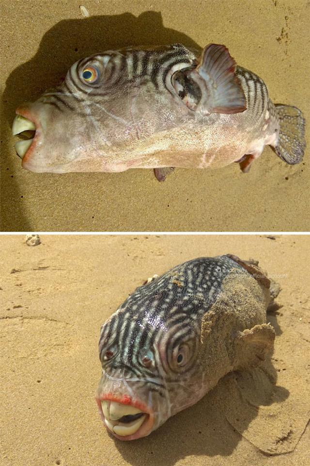 Derin denizin bilinmeyen vahşi yüzleri