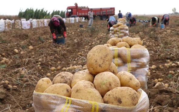 Patates üreticisine şimdi de yağmur engeli: Çamur olduğu için tarlalara girilemiyor 76