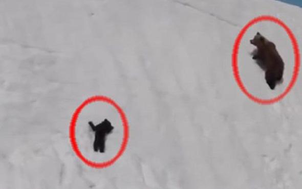 Azimi ile sosyal medyayı sallayan ayı yavrusu