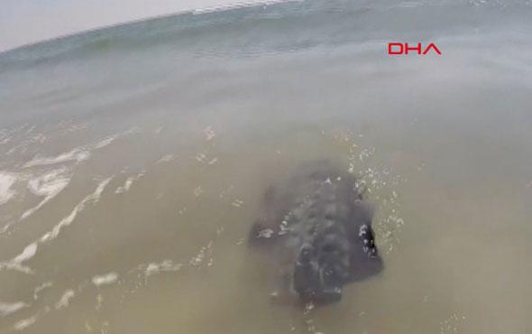 Yüzerek karaya çıkabilen robot geliştirildi