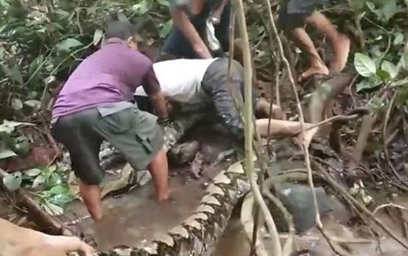 Şoke eden görüntü! Kütük diye piton yılanın üstüne bastı