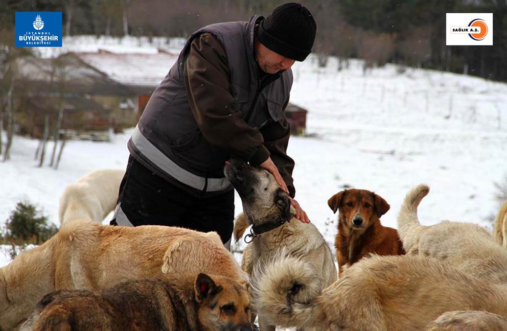 Sahipsiz hayvanlar koruma altında!