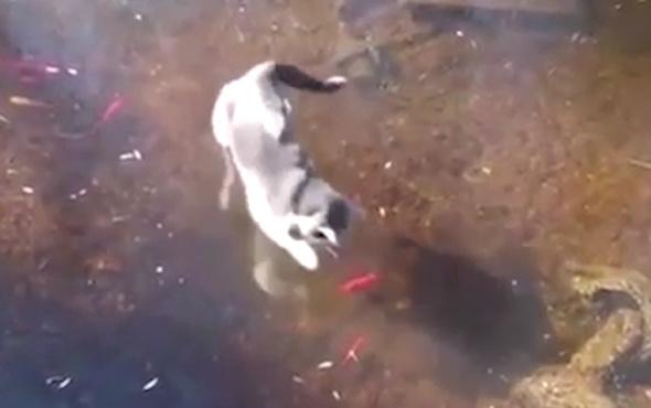 Balık avlarken çılgına dönen kedi