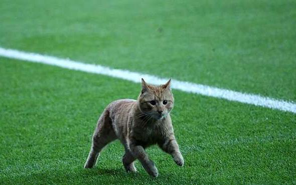 UEFA Beşiktaş'ı disiplin kuruluna sevketti!