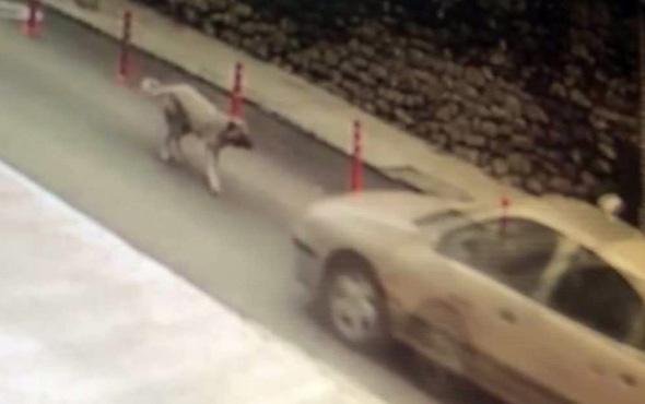Resmi plakalı araç ezdiği köpeği bırakıp kaçtı