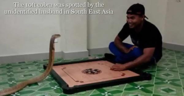 Dünya bunu da gördü kimseyi bulamadı 3 metrelik yılanla evlendi