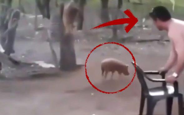 Yavru domuzu yakalayan adama şok